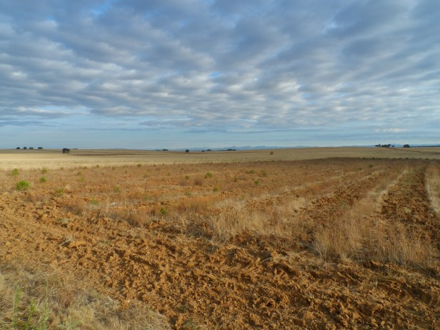 The desolate landscapes and the rising sun made for a reflective morning on the Camino.